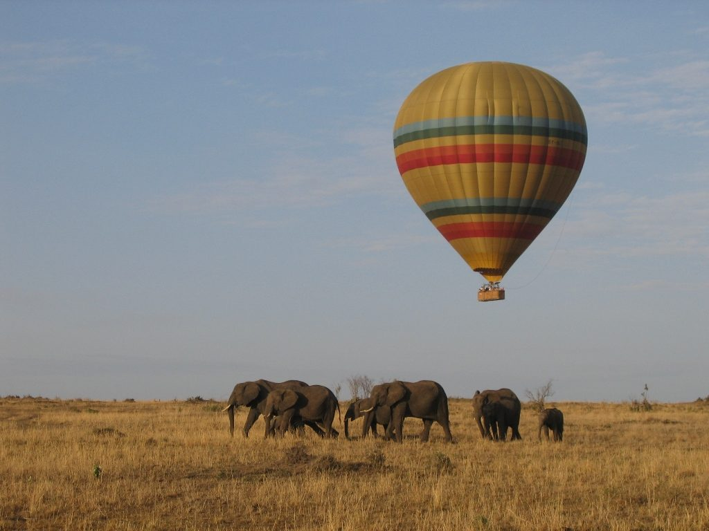 Tips For A Safari Honeymoon Adventure