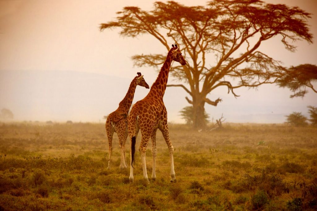 Tips For A Safari