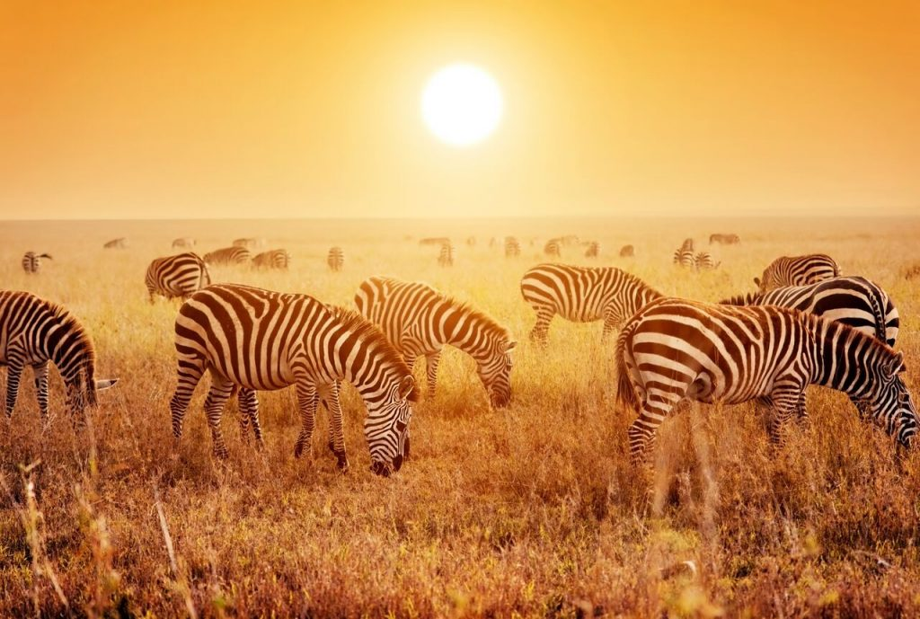 Safari Honeymoon Adventure